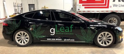 gLeaf car decals